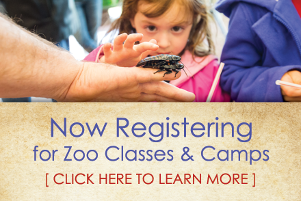 Now Registering for Zoo Classes